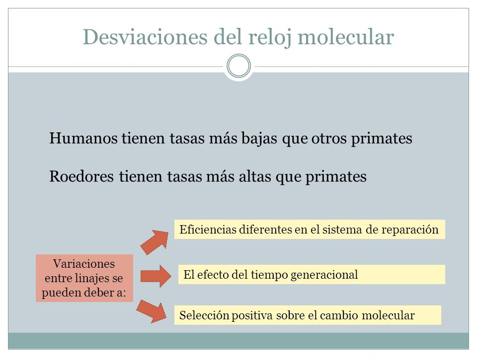 Desviaciones del reloj molecular