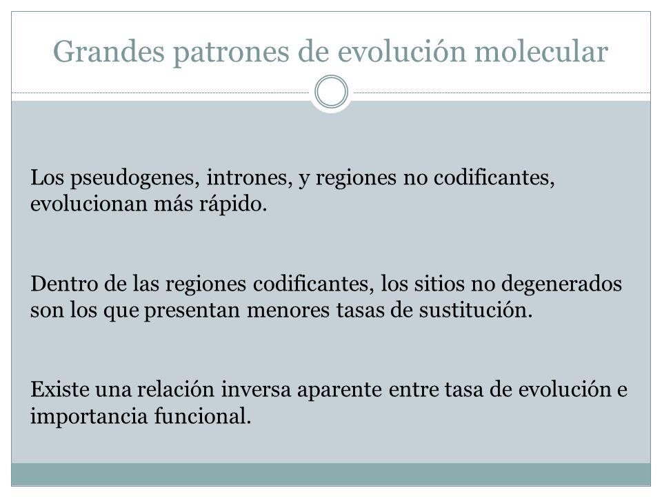 Grandes patrones de evolución molecular