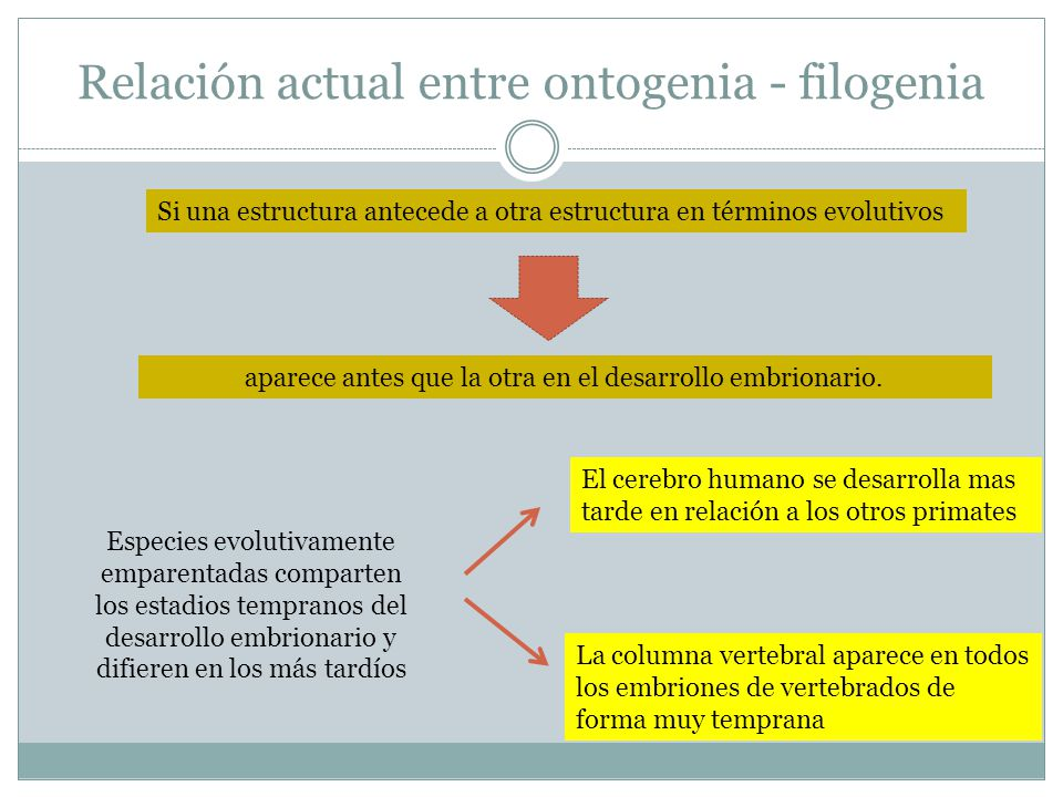 Relación actual entre ontogenia - filogenia