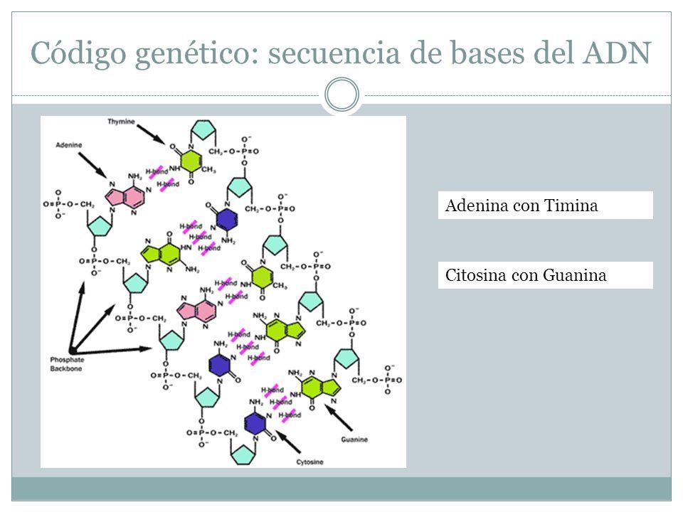 Código genético: secuencia de bases del ADN
