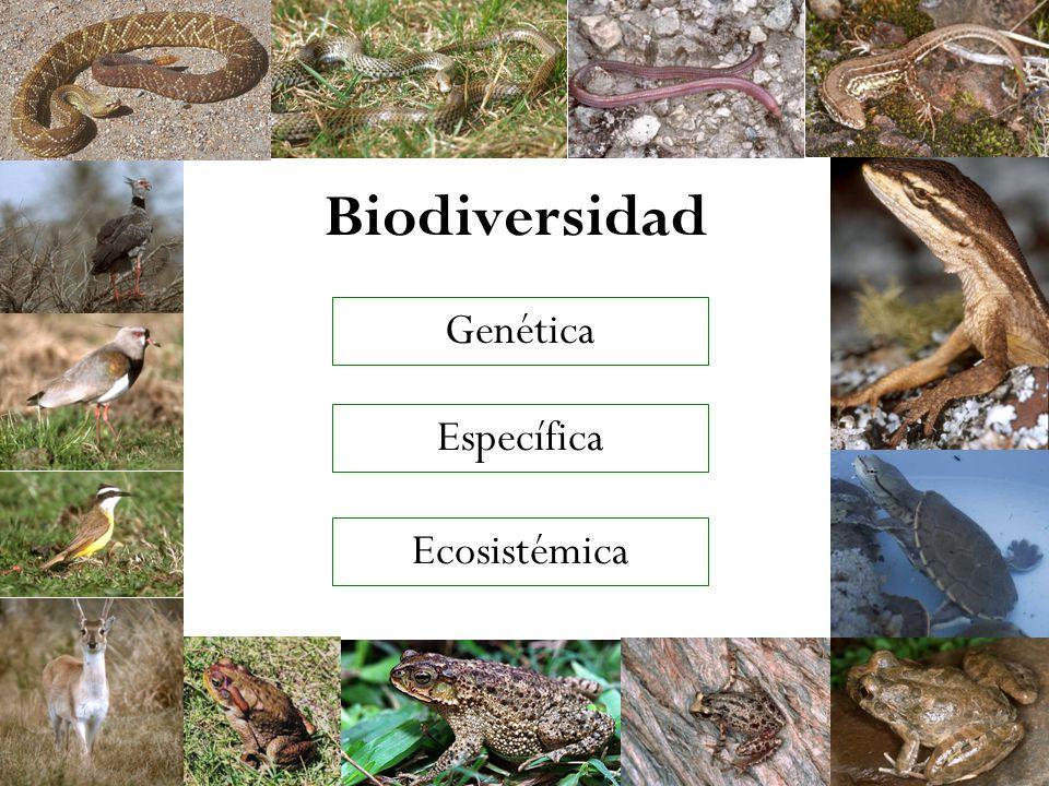 Biodiversidad Genética Específica Ecosistémica