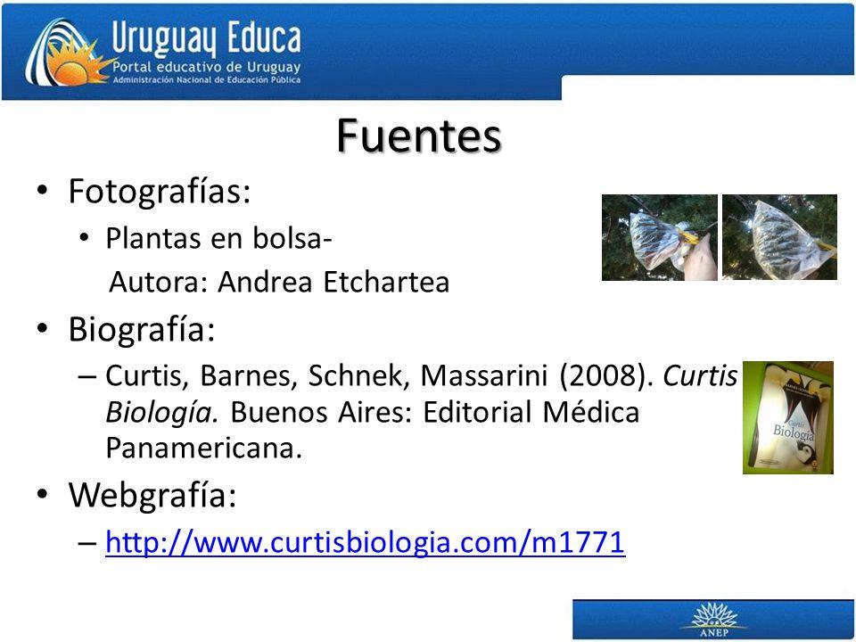 Fuentes Fotografías: Biografía: Webgrafía: Plantas en bolsa-