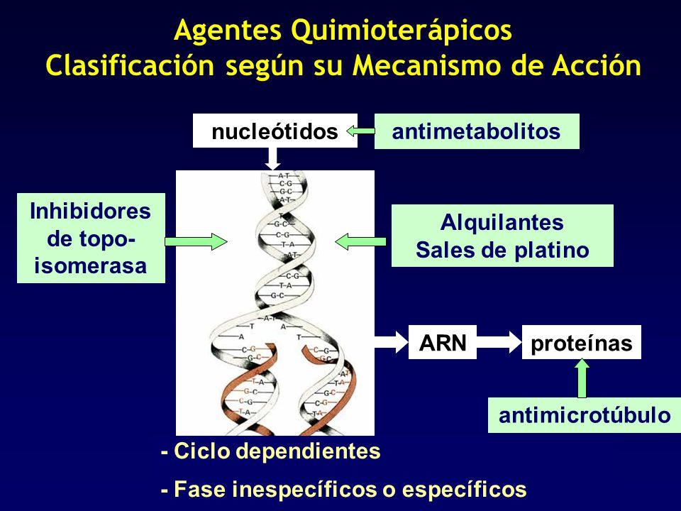 Agentes Quimioterápicos Clasificación según su Mecanismo de Acción