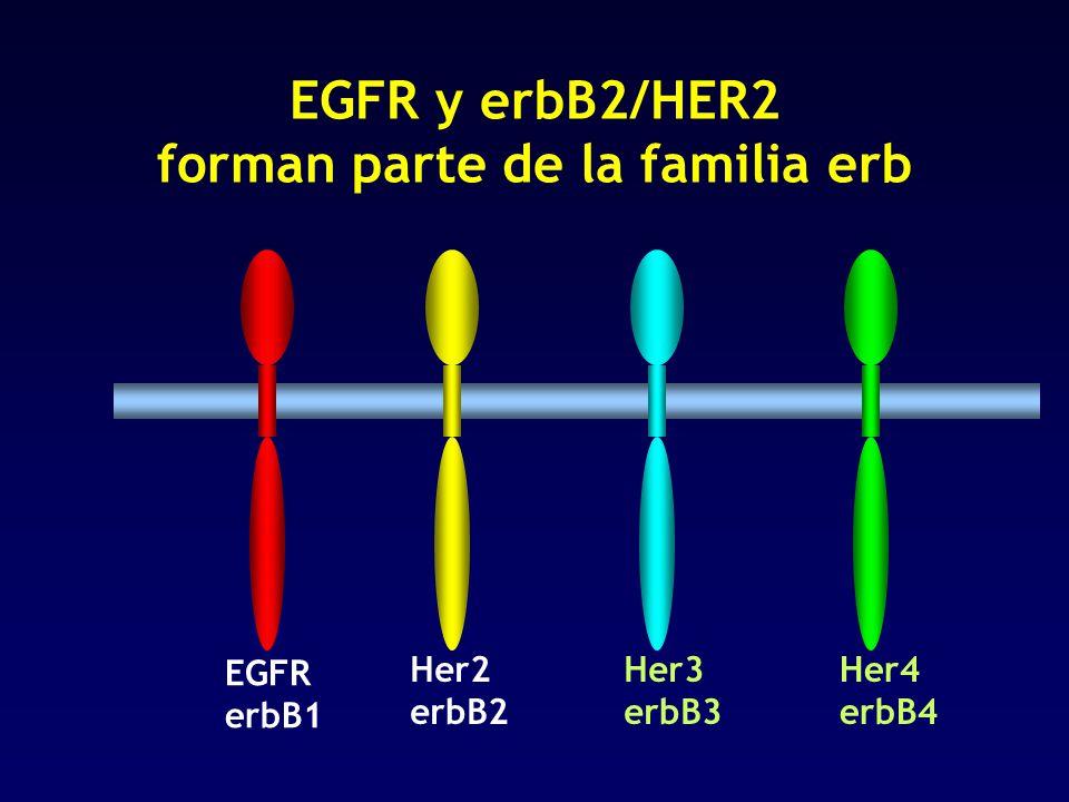 EGFR y erbB2/HER2 forman parte de la familia erb