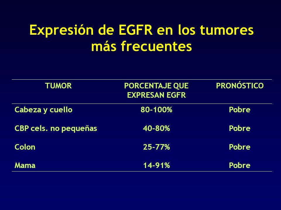 PORCENTAJE QUE EXPRESAN EGFR Expresión de EGFR en los tumores