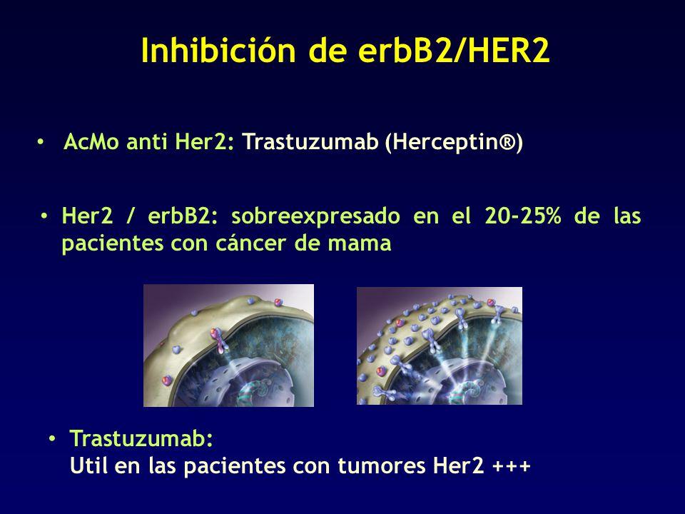 Inhibición de erbB2/HER2