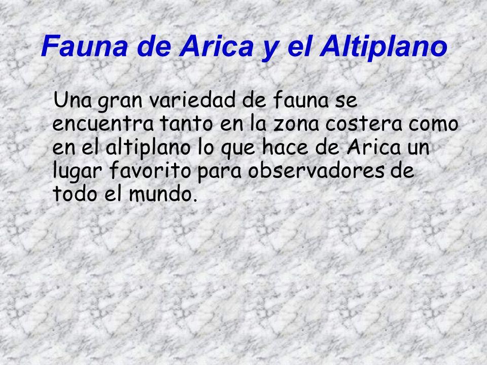 Fauna de Arica y el Altiplano