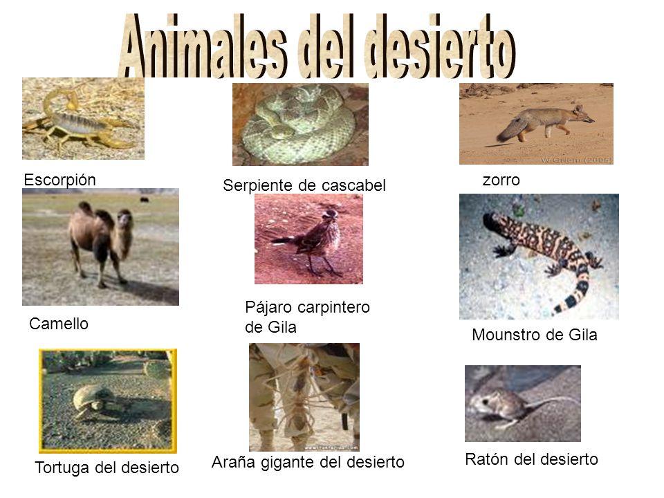 Animales del desierto Escorpión zorro Serpiente de cascabel