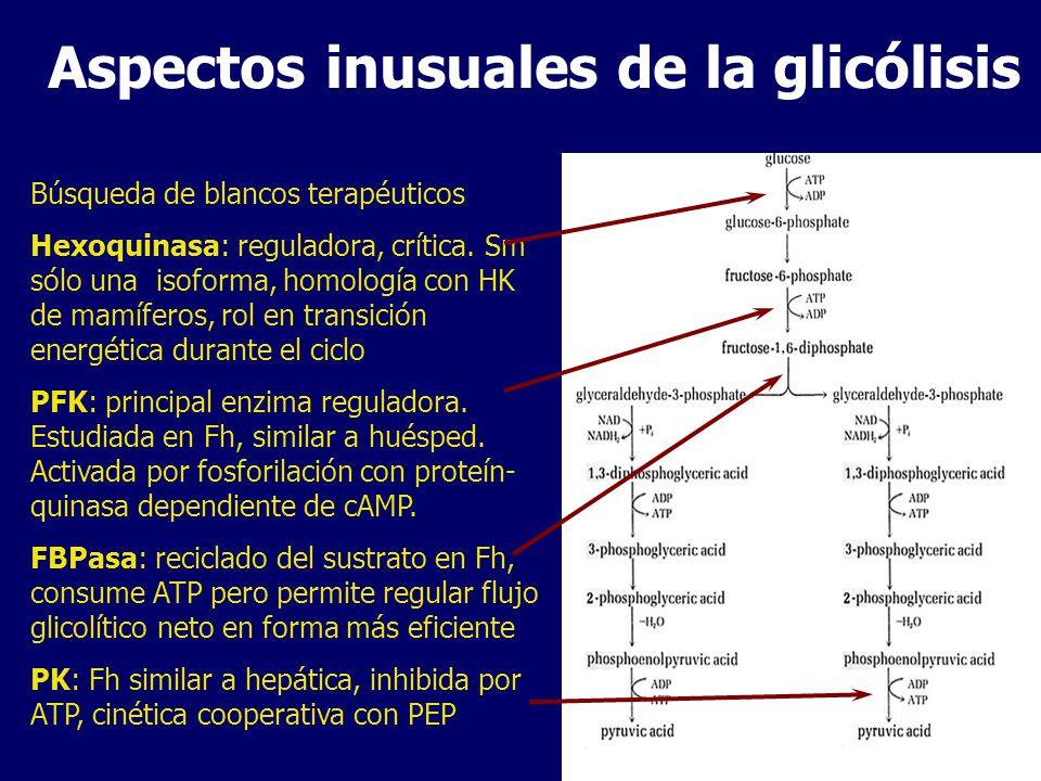 Aspectos inusuales de la glicólisis