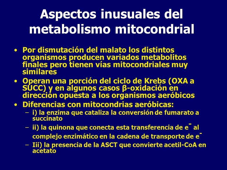 Aspectos inusuales del metabolismo mitocondrial
