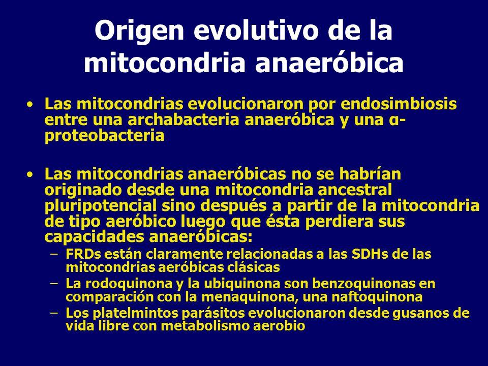 Origen evolutivo de la mitocondria anaeróbica