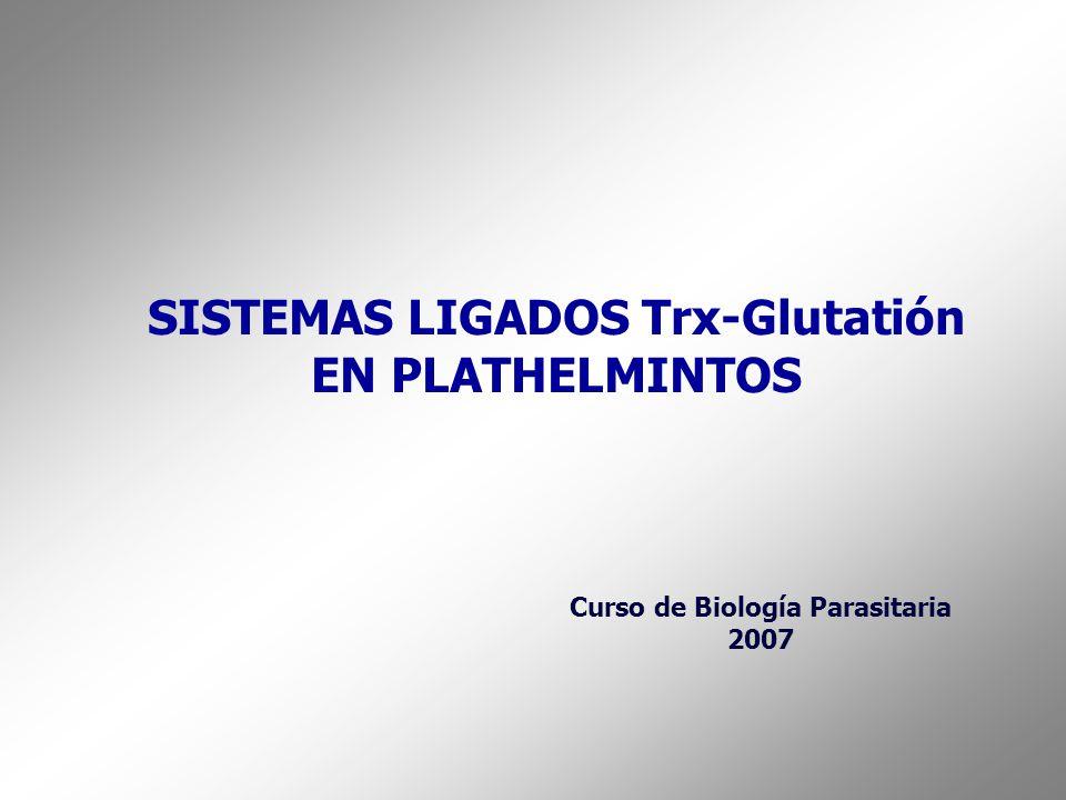 SISTEMAS LIGADOS Trx-Glutatión EN PLATHELMINTOS