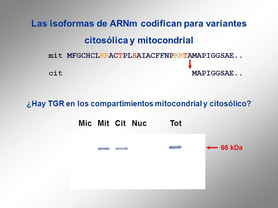 Las isoformas de ARNm codifican para variantes