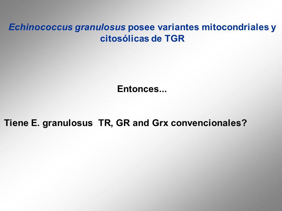 Echinococcus granulosus posee variantes mitocondriales y citosólicas de TGR