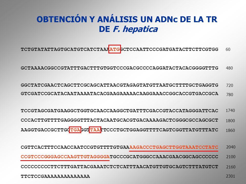 OBTENCIÓN Y ANÁLISIS UN ADNc DE LA TR