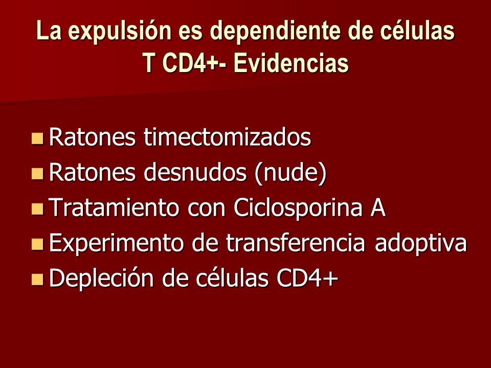 La expulsión es dependiente de células T CD4+- Evidencias