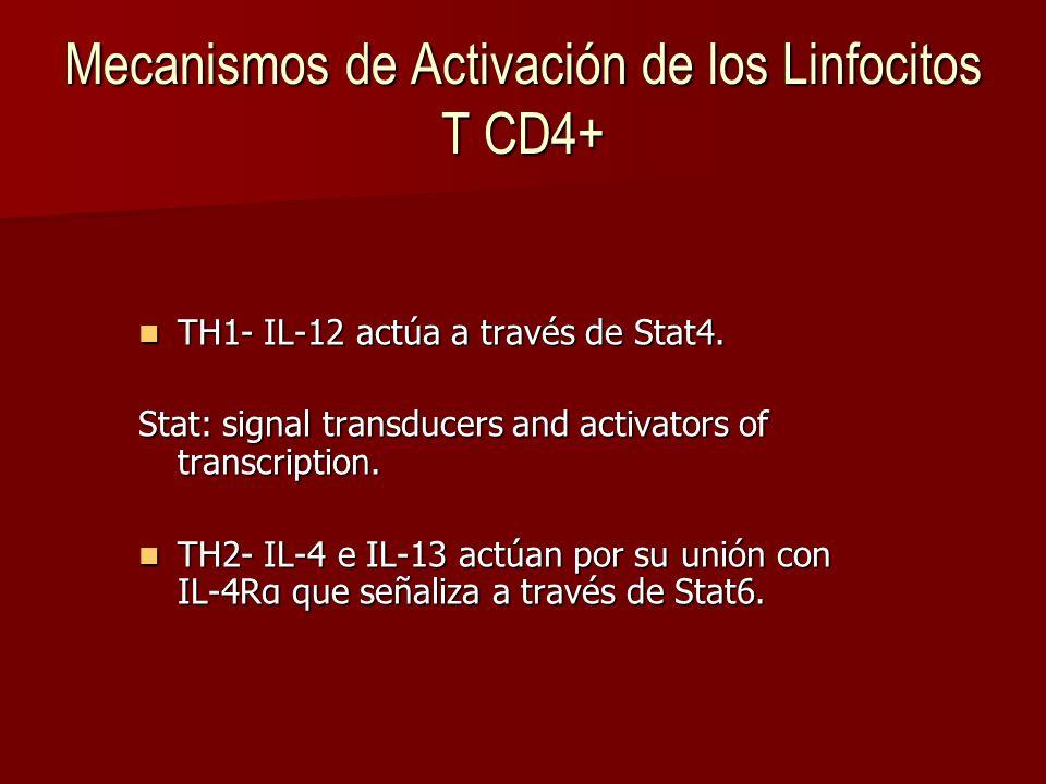 Mecanismos de Activación de los Linfocitos T CD4+
