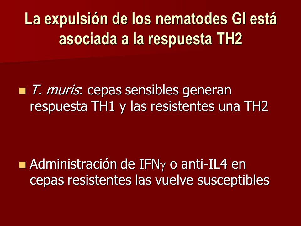La expulsión de los nematodes GI está asociada a la respuesta TH2