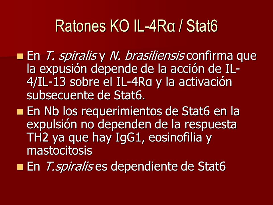 Ratones KO IL-4Rα / Stat6