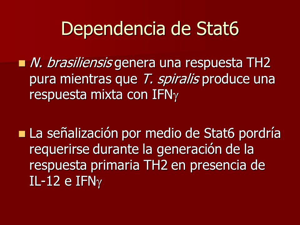 Dependencia de Stat6 N. brasiliensis genera una respuesta TH2 pura mientras que T. spiralis produce una respuesta mixta con IFN