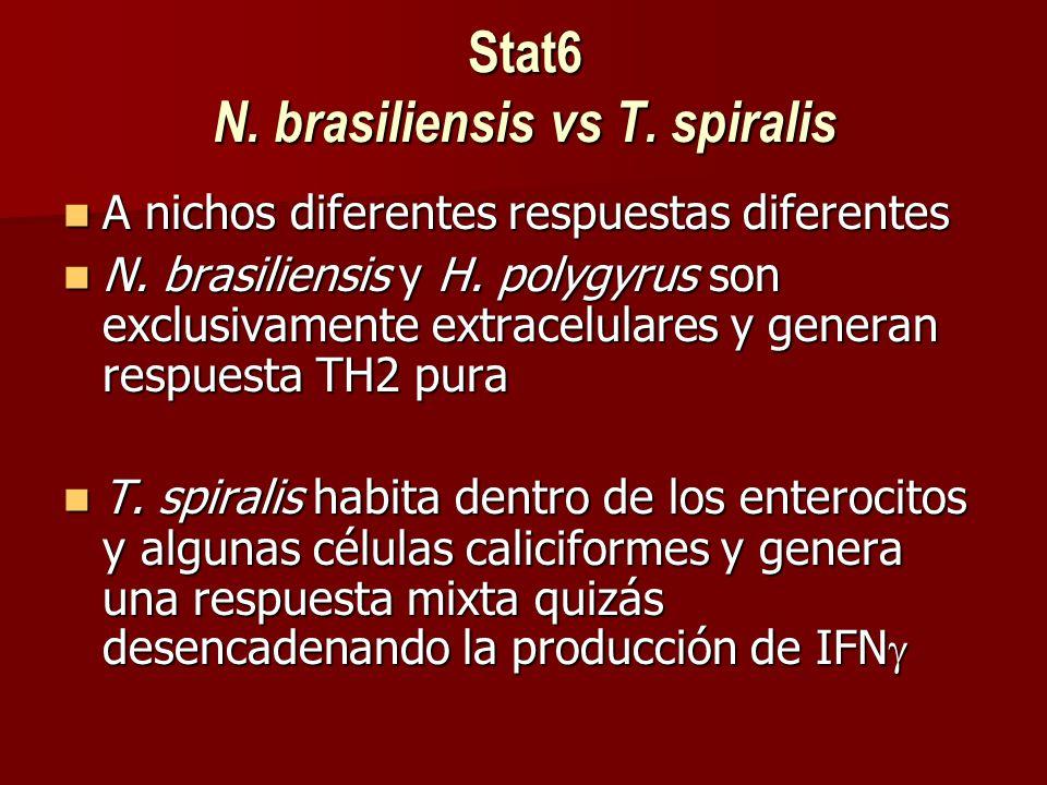 Stat6 N. brasiliensis vs T. spiralis