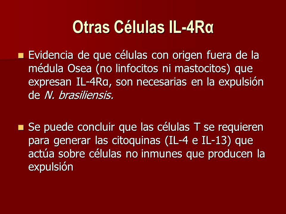 Otras Células IL-4Rα