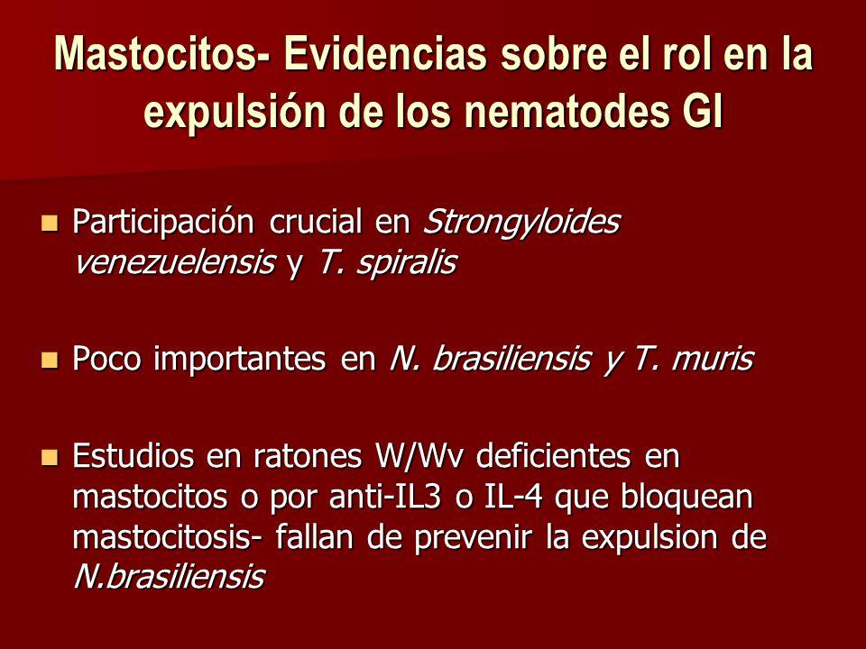 Mastocitos- Evidencias sobre el rol en la expulsión de los nematodes GI