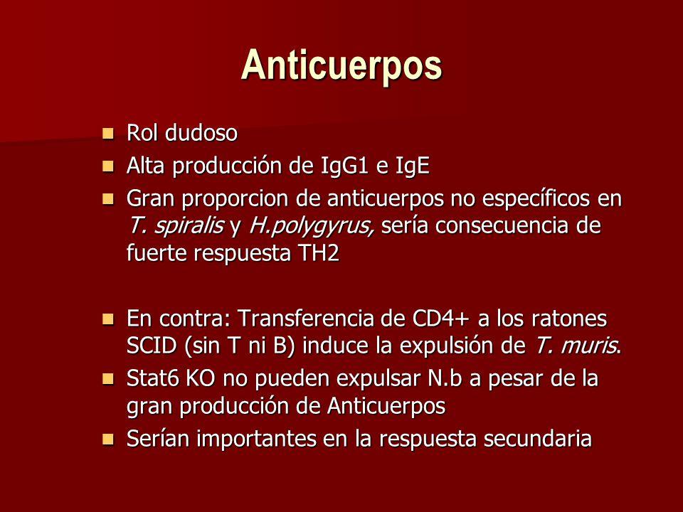 Anticuerpos Rol dudoso Alta producción de IgG1 e IgE