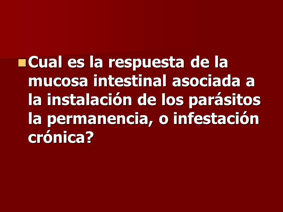 Cual es la respuesta de la mucosa intestinal asociada a la instalación de los parásitos la permanencia, o infestación crónica
