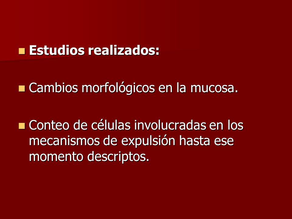 Estudios realizados: Cambios morfológicos en la mucosa.