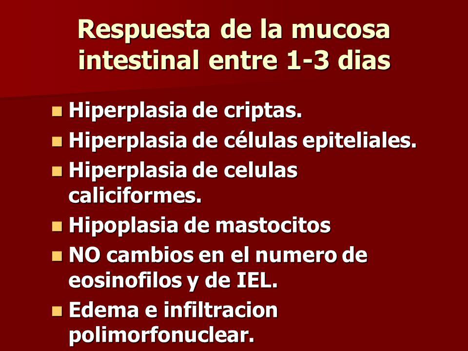 Respuesta de la mucosa intestinal entre 1-3 dias