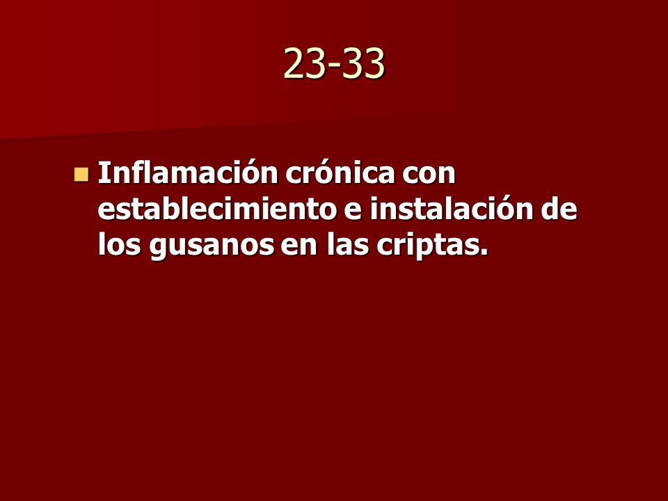 23-33 Inflamación crónica con establecimiento e instalación de los gusanos en las criptas.