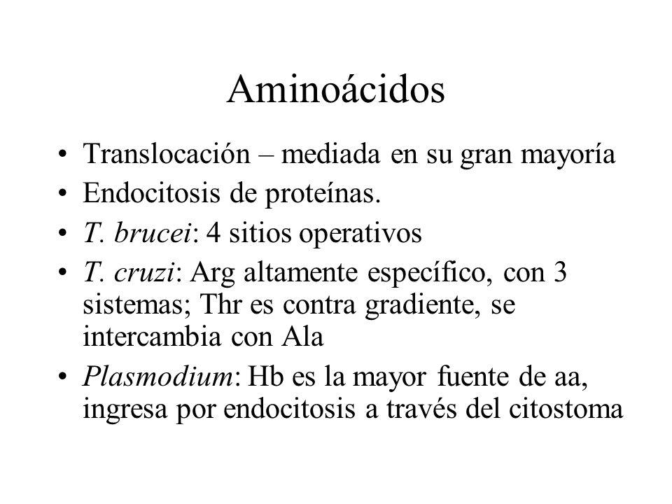 Aminoácidos Translocación – mediada en su gran mayoría