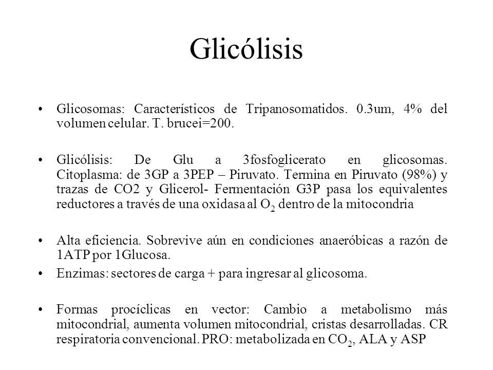 Glicólisis Glicosomas: Característicos de Tripanosomatidos. 0.3um, 4% del volumen celular. T. brucei=200.
