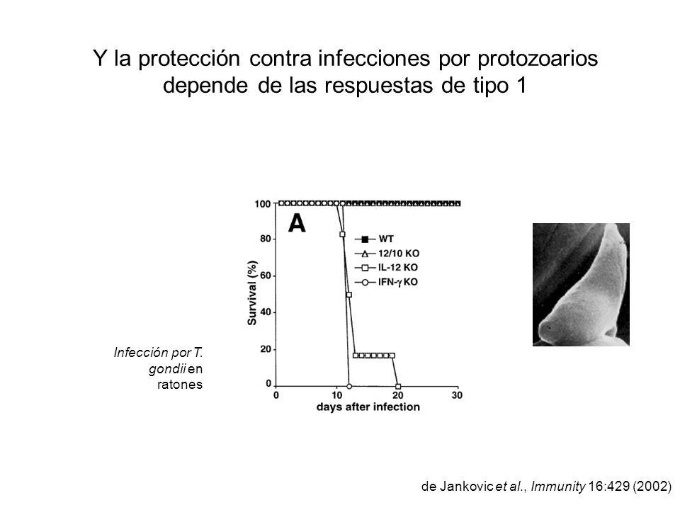 Y la protección contra infecciones por protozoarios depende de las respuestas de tipo 1