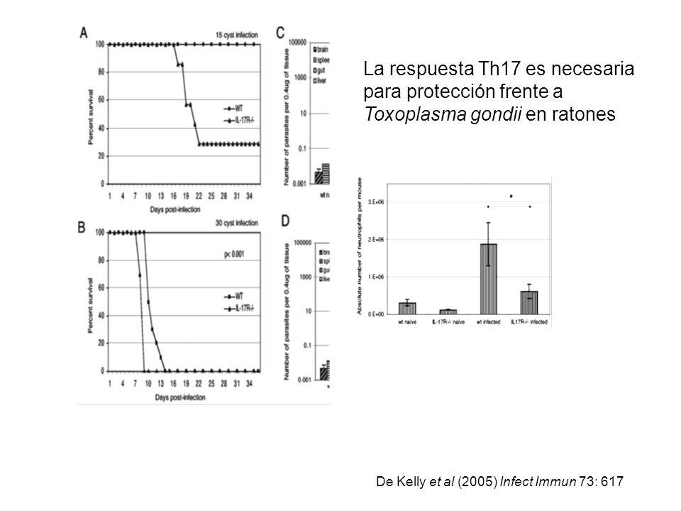 La respuesta Th17 es necesaria para protección frente a Toxoplasma gondii en ratones