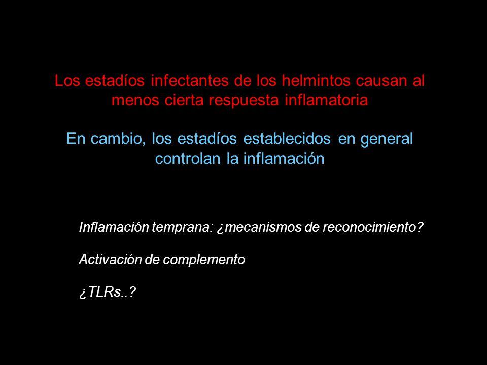 Los estadíos infectantes de los helmintos causan al menos cierta respuesta inflamatoria