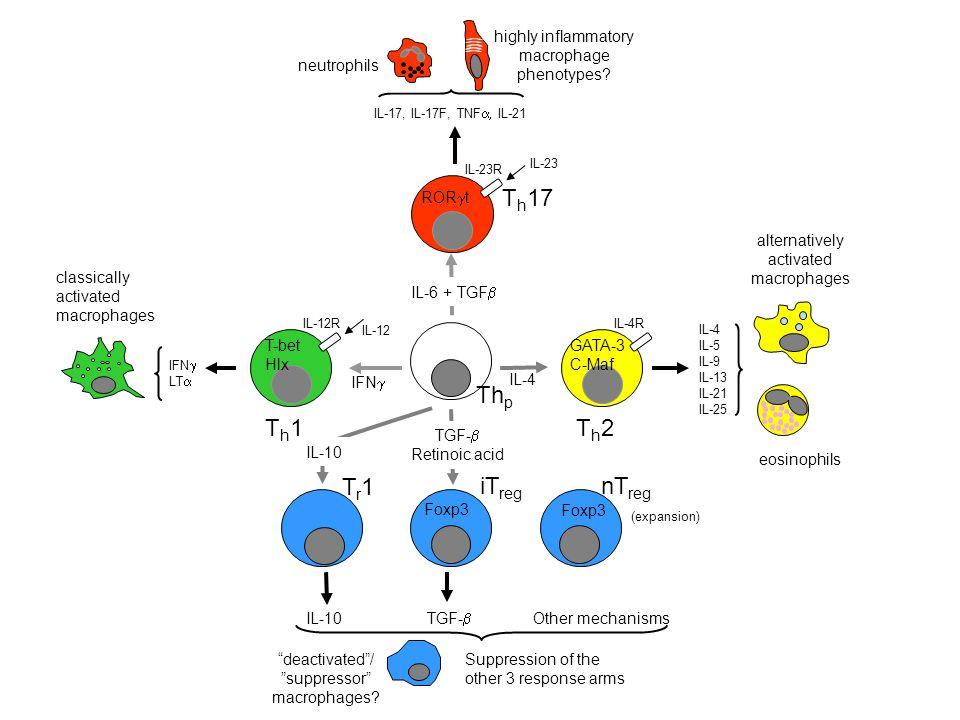 Thp Th17 Th1 Th2 iTreg Tr1 nTreg IL-6 + TGFb RORgt neutrophils