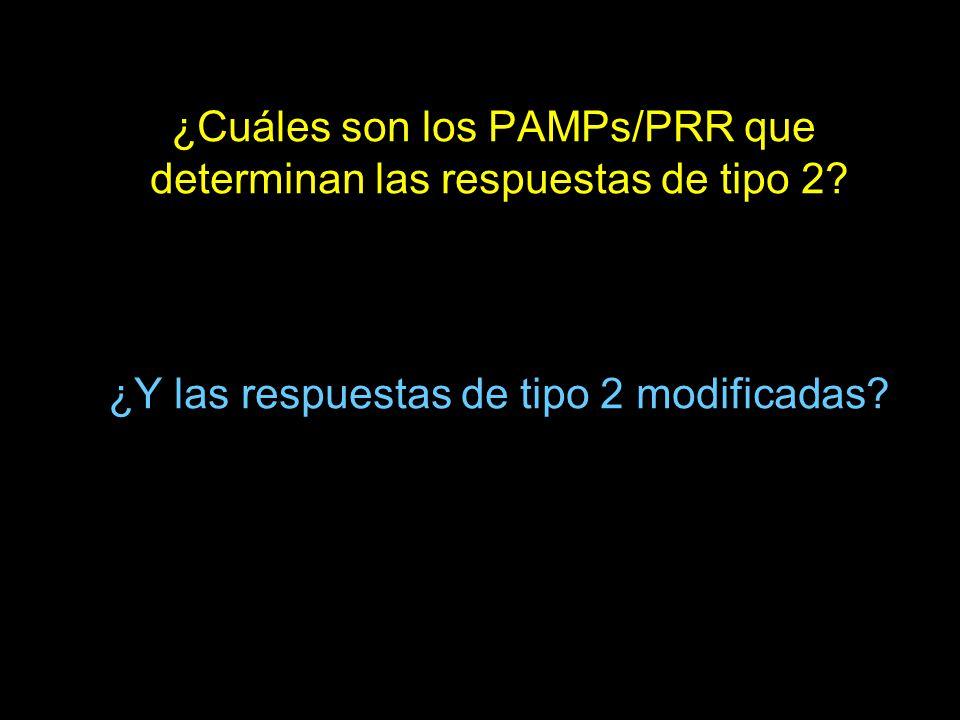 ¿Cuáles son los PAMPs/PRR que determinan las respuestas de tipo 2