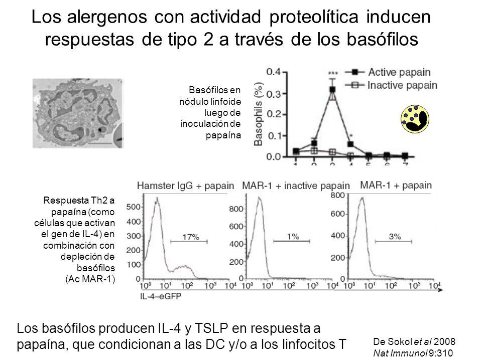Los alergenos con actividad proteolítica inducen respuestas de tipo 2 a través de los basófilos