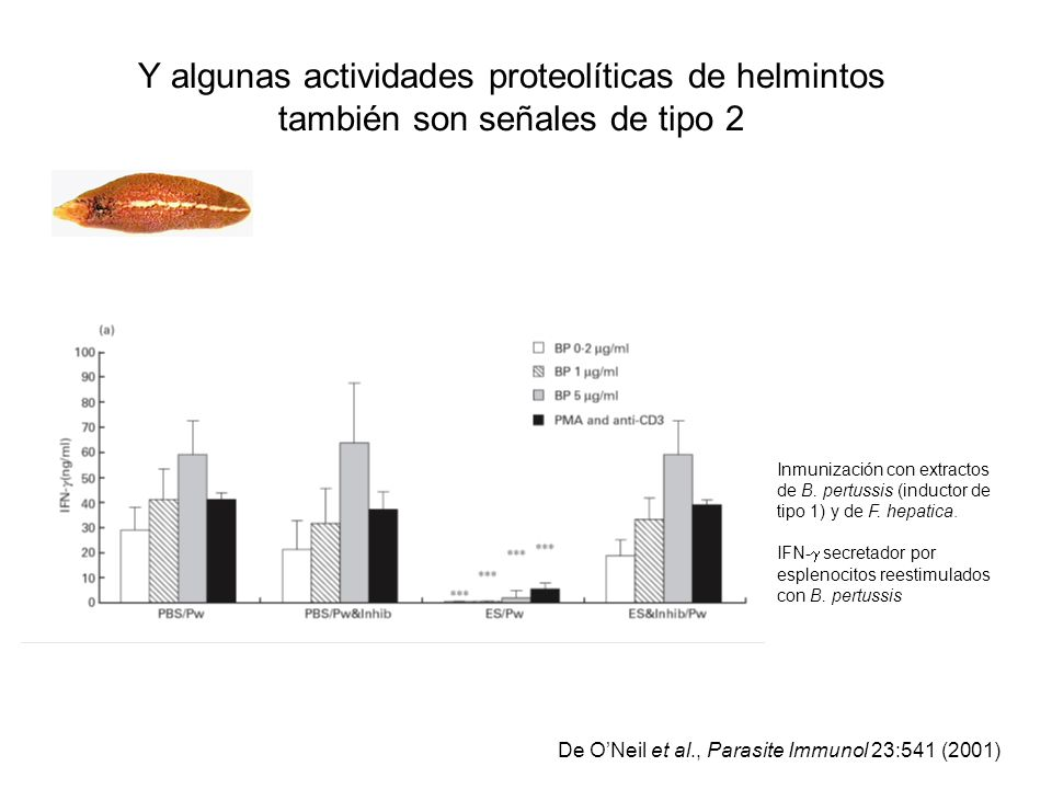Y algunas actividades proteolíticas de helmintos también son señales de tipo 2