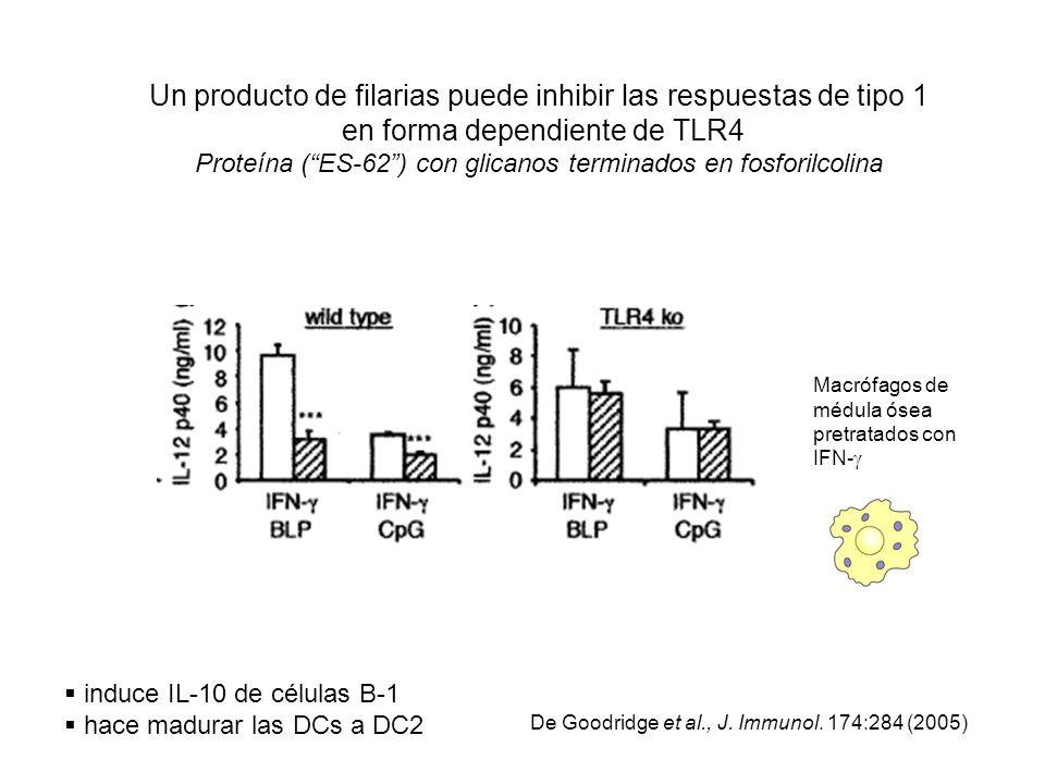 Un producto de filarias puede inhibir las respuestas de tipo 1 en forma dependiente de TLR4 Proteína ( ES-62 ) con glicanos terminados en fosforilcolina
