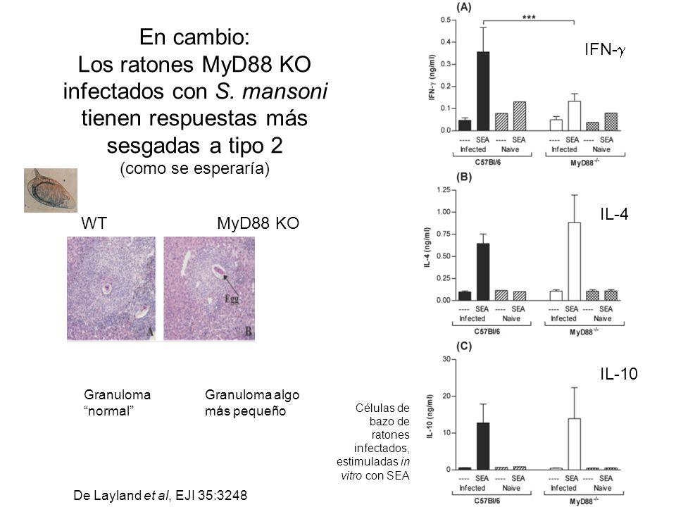 En cambio: Los ratones MyD88 KO infectados con S. mansoni tienen respuestas más sesgadas a tipo 2. (como se esperaría)