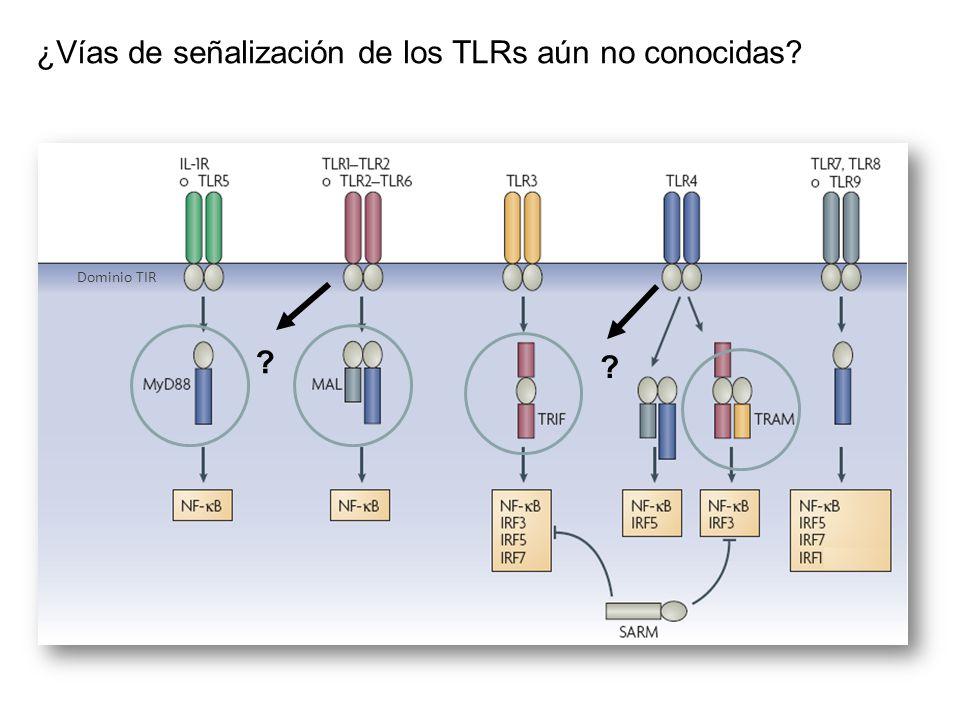 ¿Vías de señalización de los TLRs aún no conocidas