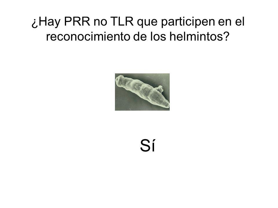 Sí ¿Hay PRR no TLR que participen en el