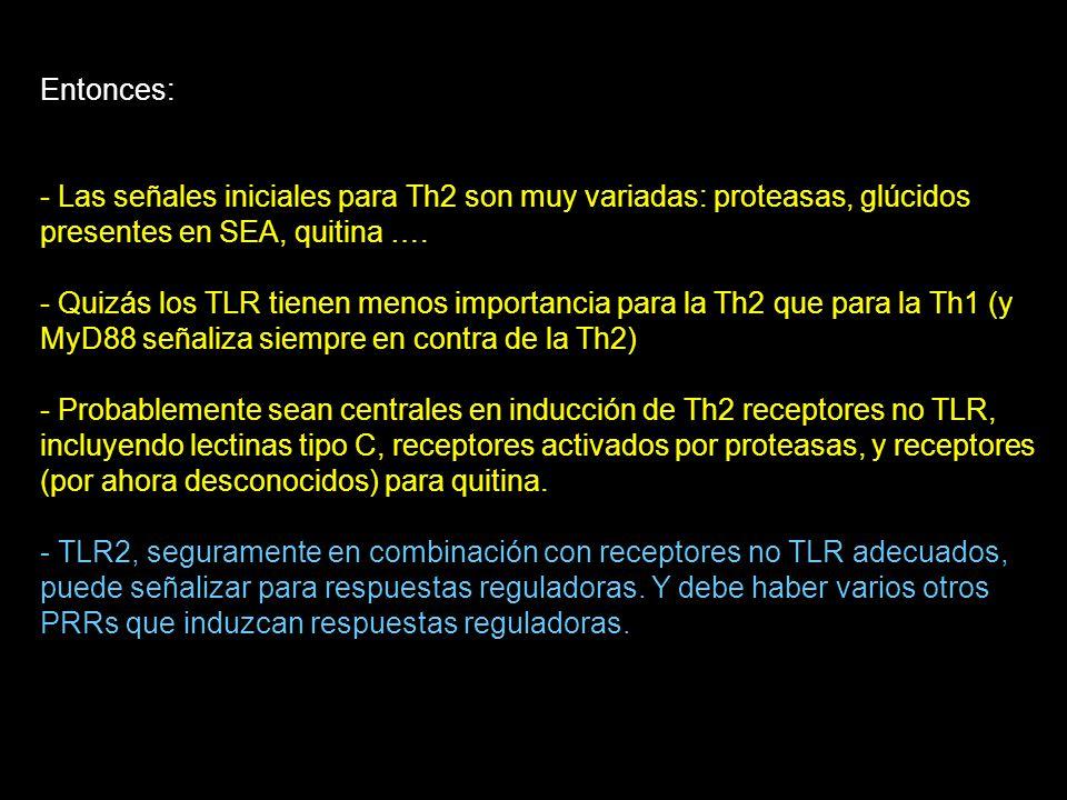 Entonces: - Las señales iniciales para Th2 son muy variadas: proteasas, glúcidos presentes en SEA, quitina ….