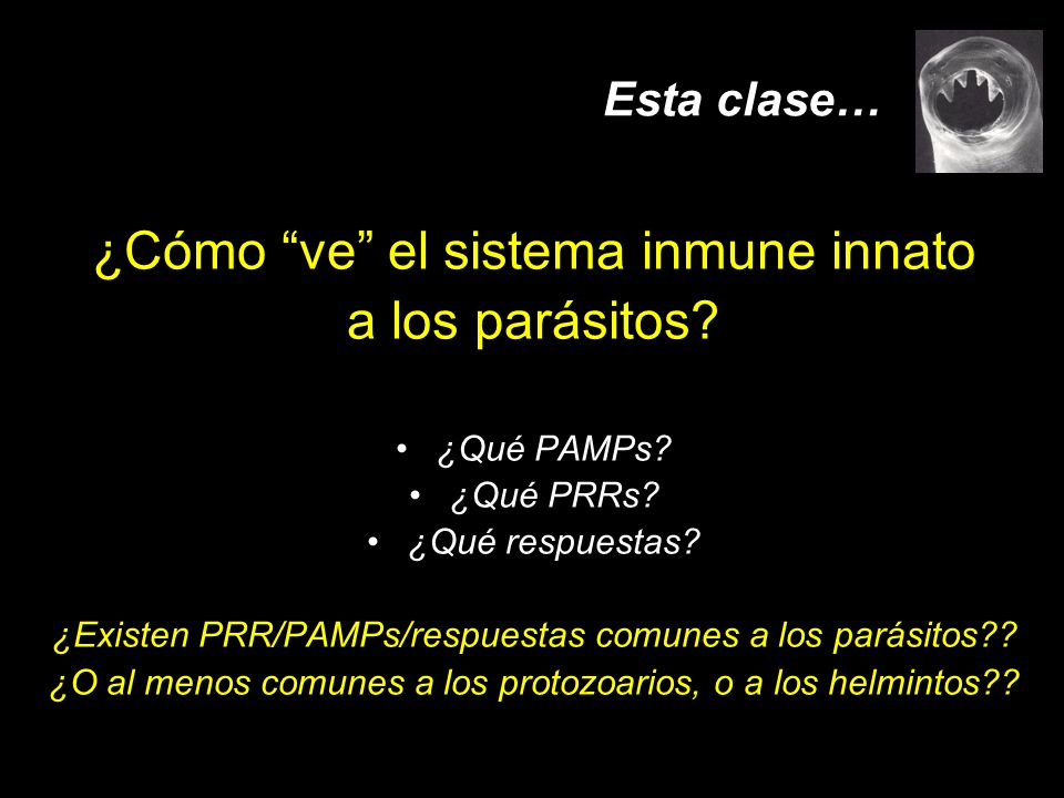 ¿Cómo ve el sistema inmune innato a los parásitos