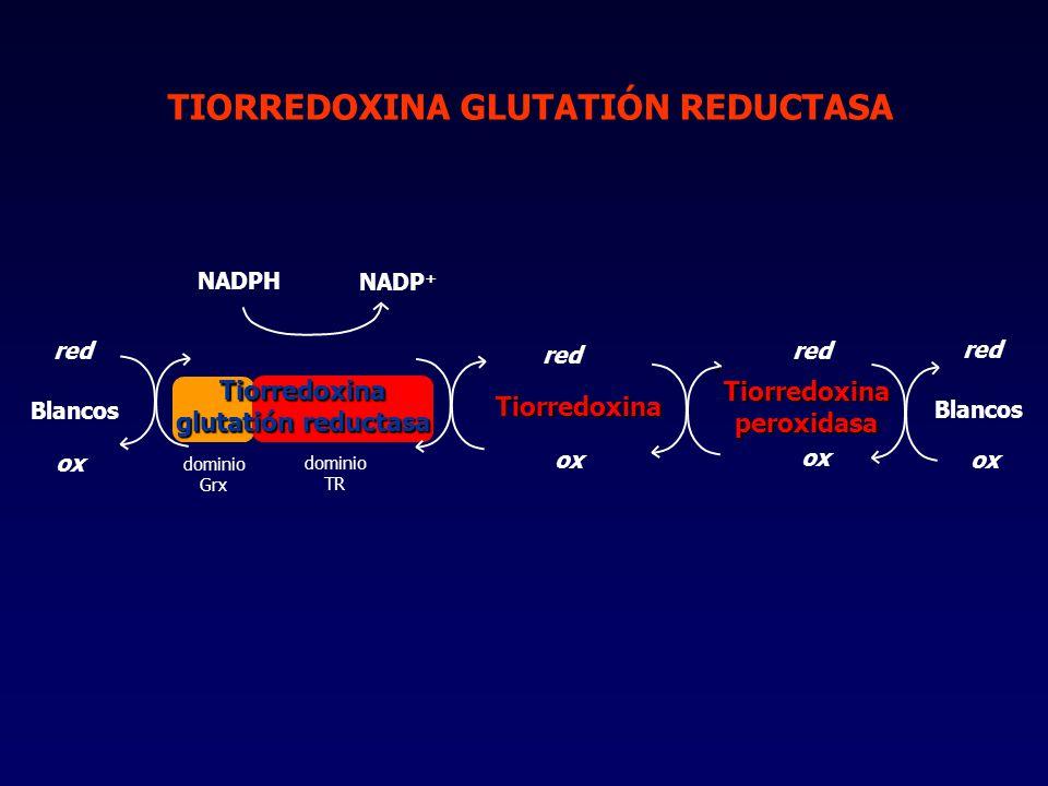 Tiorredoxina glutatión reductasa Tiorredoxina peroxidasa