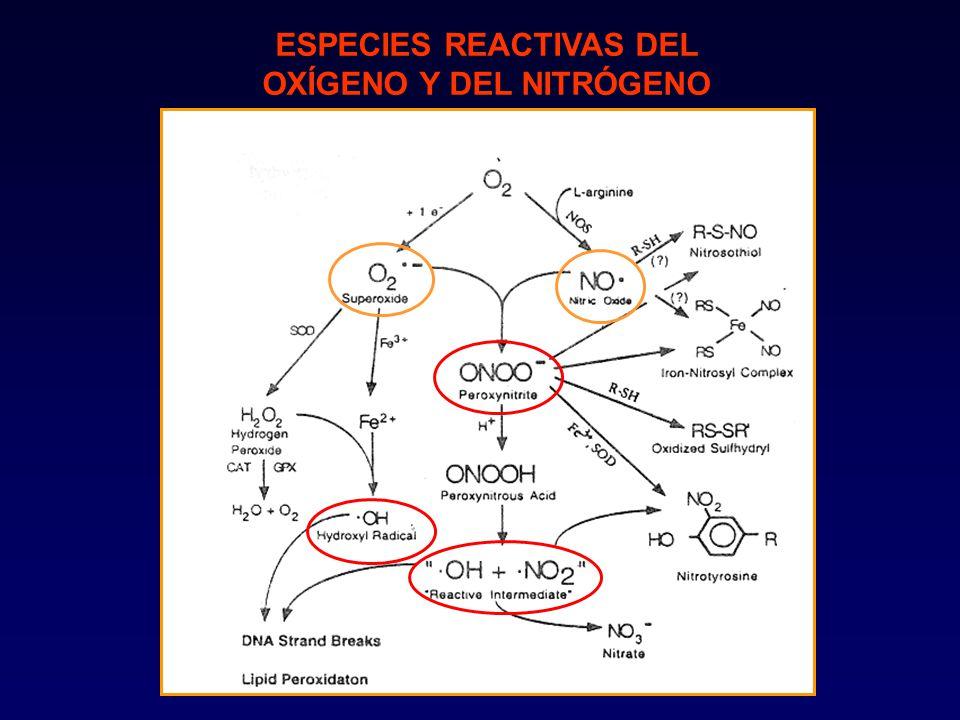 ESPECIES REACTIVAS DEL OXÍGENO Y DEL NITRÓGENO