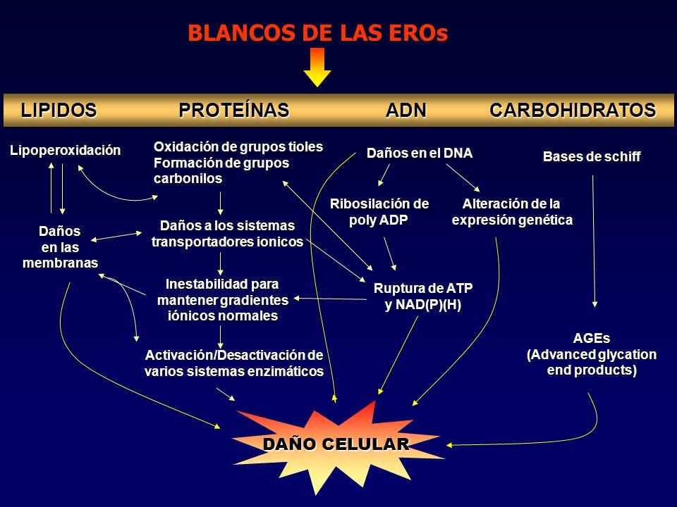 BLANCOS DE LAS EROs LIPIDOS PROTEÍNAS ADN CARBOHIDRATOS DAÑO CELULAR